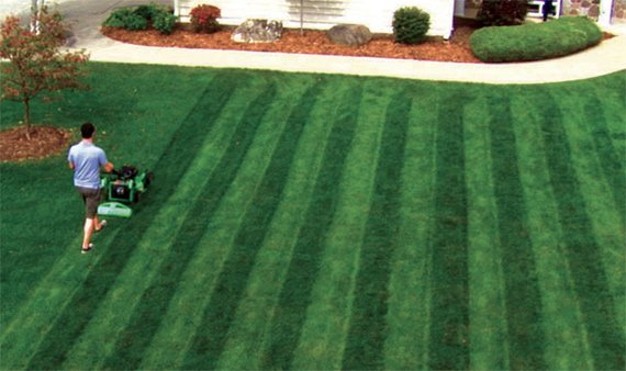Lawn Stryper Cool Material