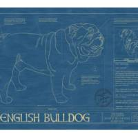 animal-blueprints-bulldog